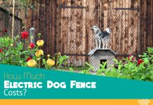How Much Electric Dog Fence Costs?