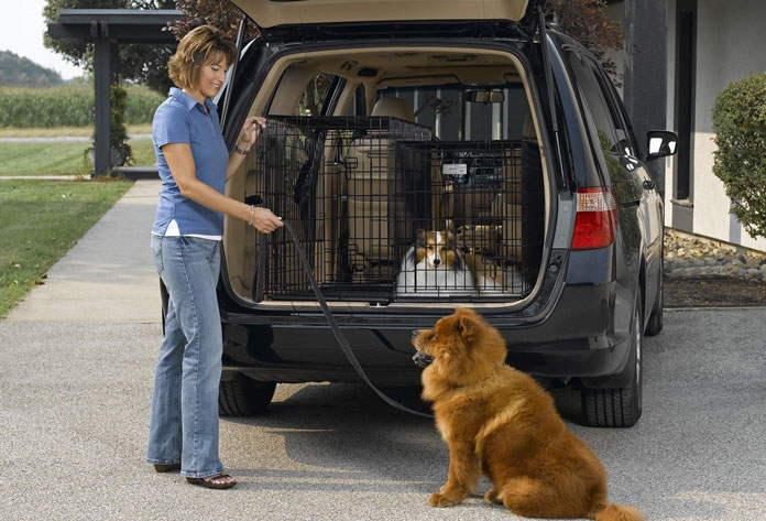 A woman packs dogs in the car