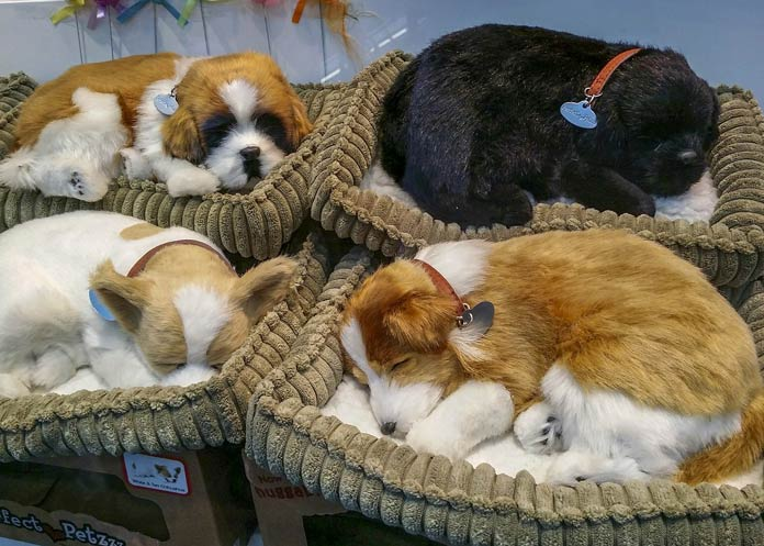 Beautiful Puppies Sleep On The Beds