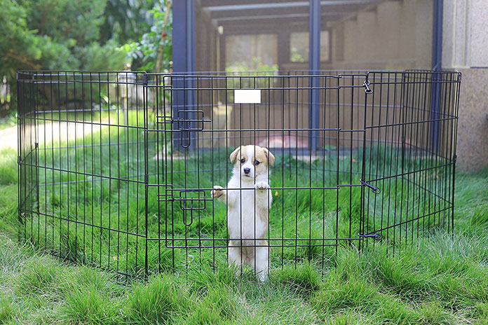 Best Playpen for Dog