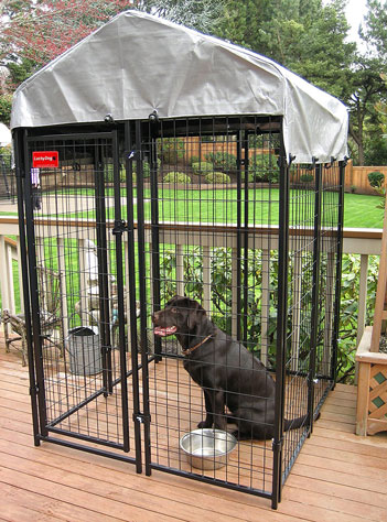 Black dog in kennel