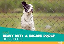 Featured image for the article: Escape Proof Crates for Dogs