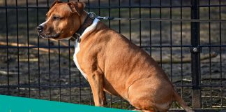 Featured image for top rated outdoor kennels