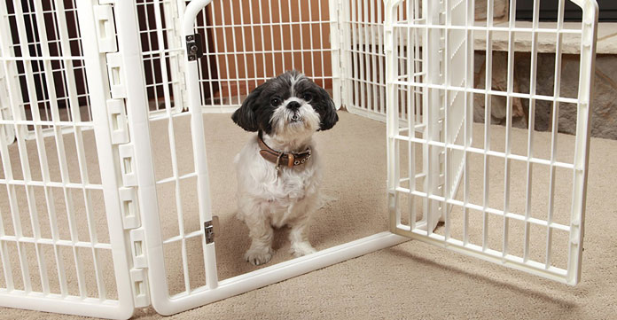 Small dog in Playpen