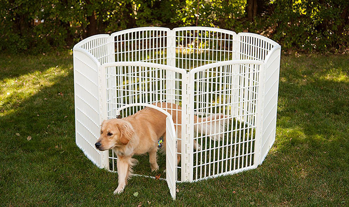 The dog leaves the Playpen