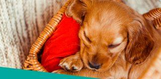 beautiful puppy sleeping in a basket