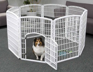 Dog in playpen at home