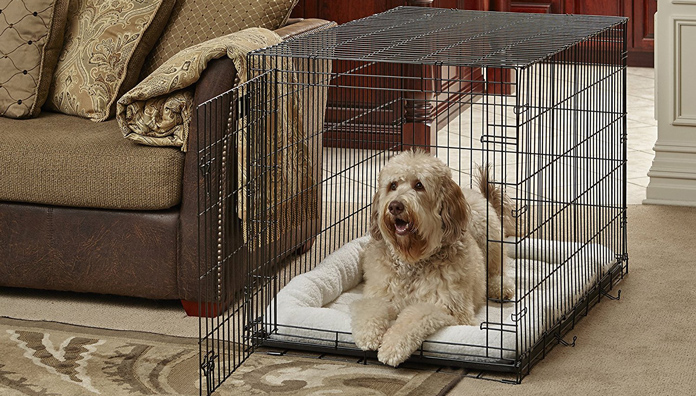 image of dog in crate at home