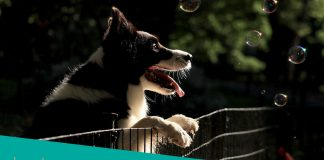 featured image for the top-rated puppy exercise pens