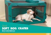 Featured image for soft sided kennels