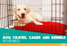Labrador in one our top pet kennel picks - featured image