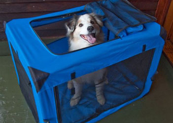 Happy Dog in Soft Crate