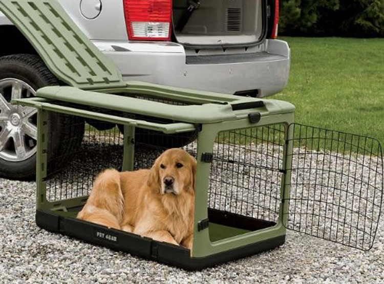golden retriever in a green kennel ready for travel