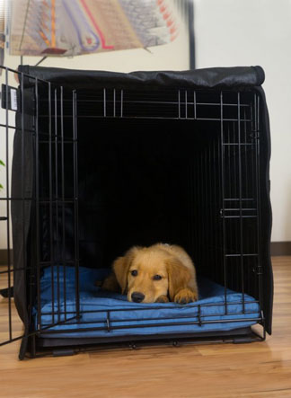 Small dog in crate-Conclusion
