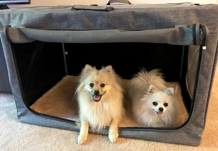 image of Two Dogs in Soft Crate