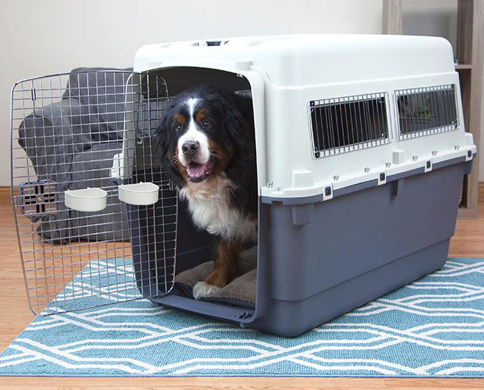 bernese mountain dog in plastic crate