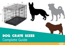 kennel sizes for every breed