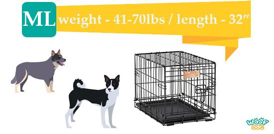 two dogs intermediate size