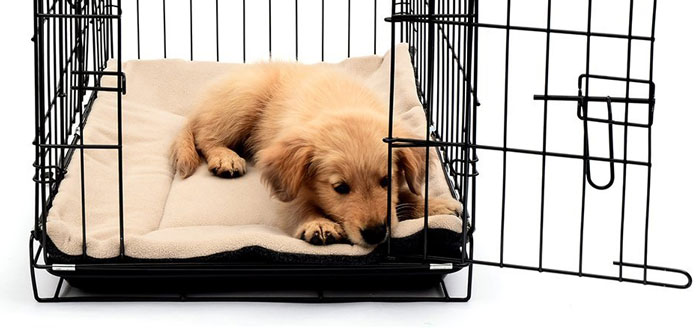 image of puppy dog in crate