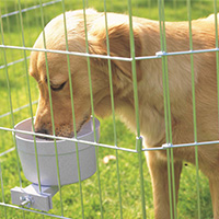 Dog drinking from savic crock water bowl