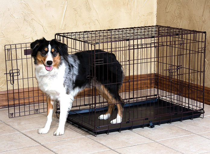 a cute dog standing in a thin metal crate