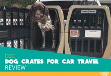 Featured image for car travel cage for dogs