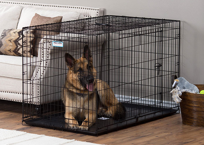 German Shepperd sits in proselect empire crate