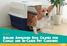 The 5 Best Indestructible Dog Beds Compared The Ultimate