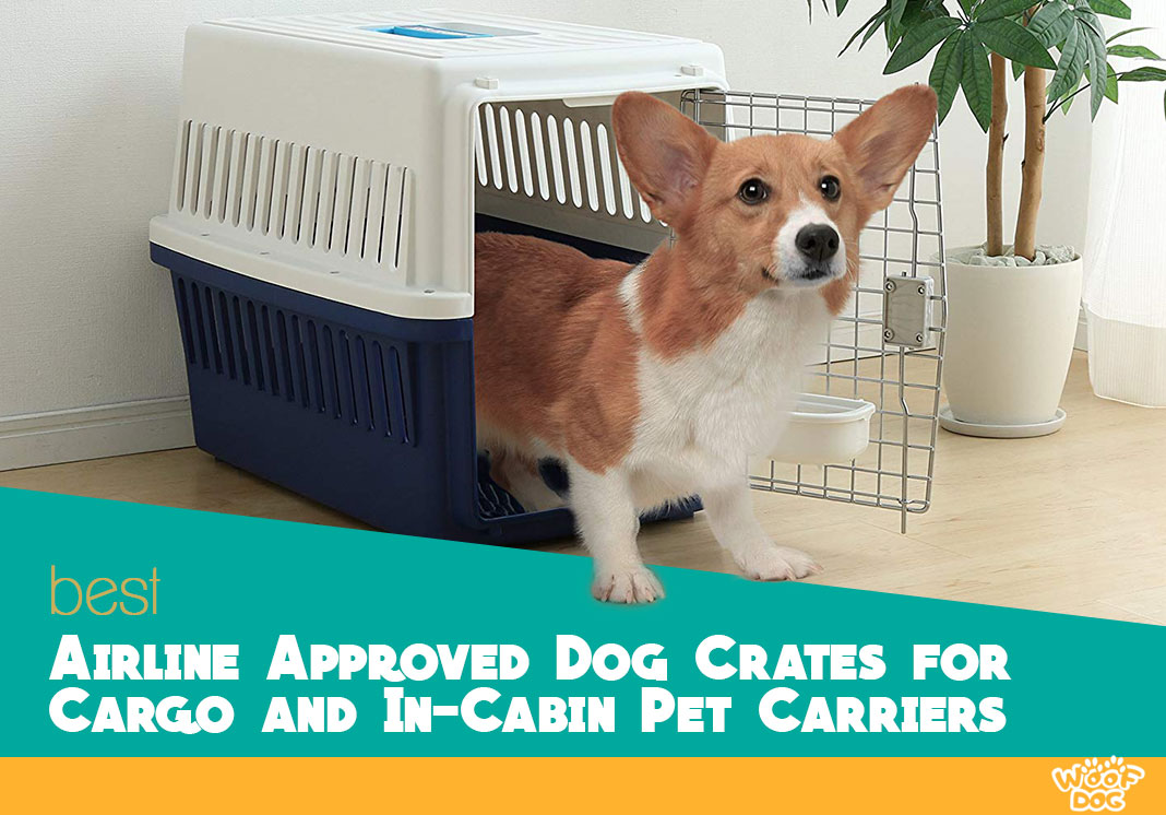 Our In-depth Airline Approved Dog Crates review