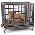 Small image of ProSelect empire cages for dogs