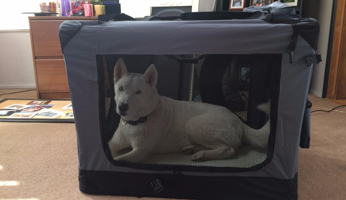 White dog in EliteField 3-Door Folding Soft Dog Crate