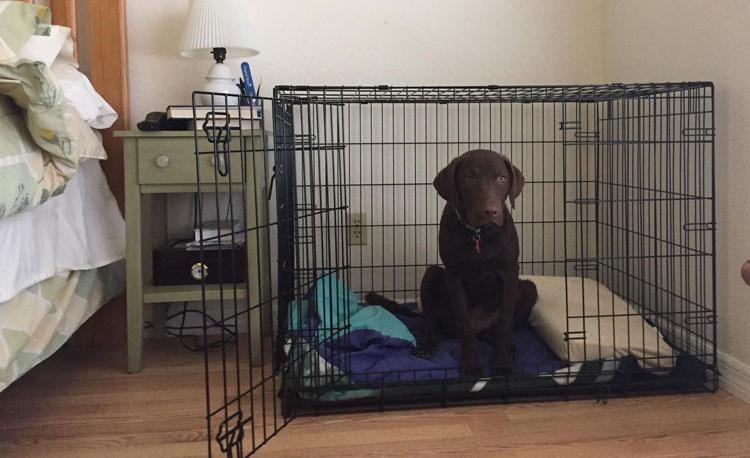 black dog in Midwest iCrate Single Door