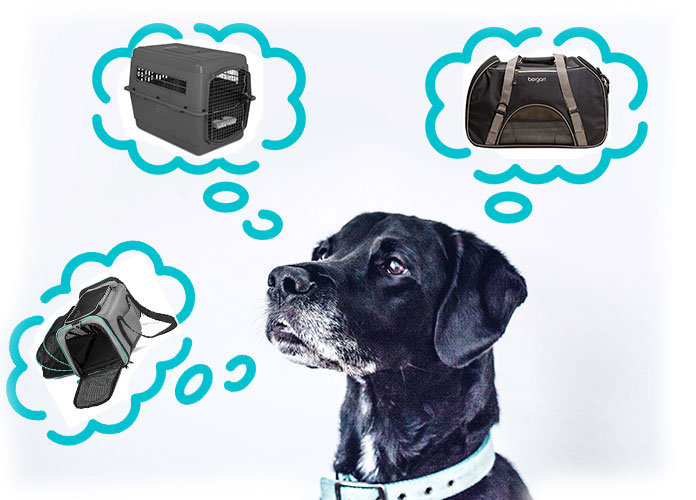 black dog is thinking which air crate is the best for him