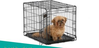 Feature image for Midwest Homes Crate with Puppy