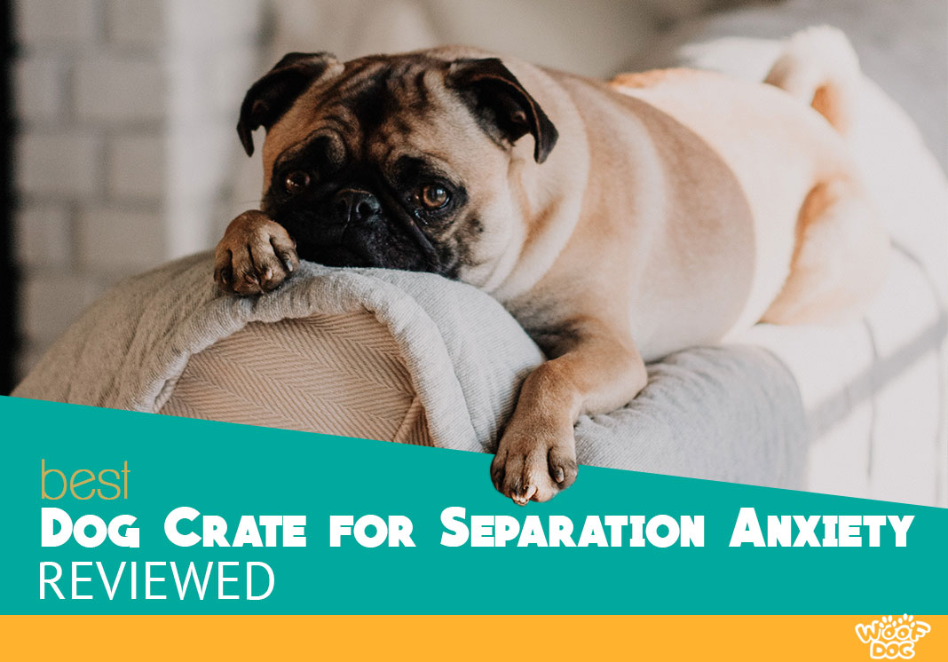 dog crate for separation anxiety reviewed