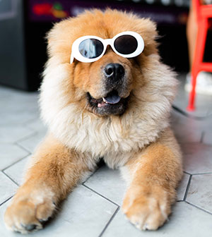dog is chilling with glasses on