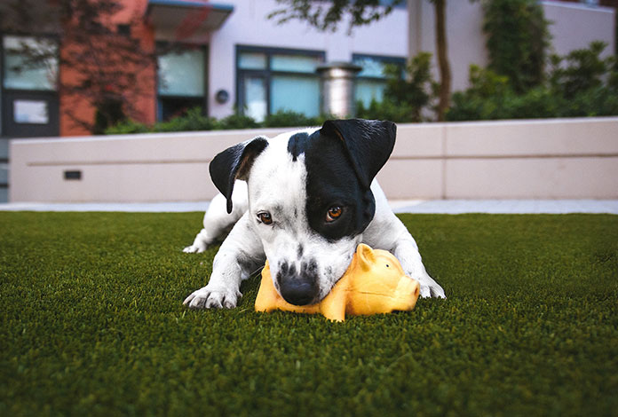 dog is playing with his yellow-toy