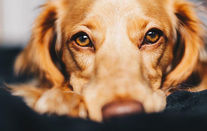 dog looks sad