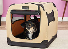 image of petnation product for dogs