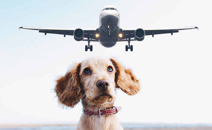puppy is looking at the airplane on the sky