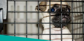 Featured Image for Are Dogs Kennel Safe article