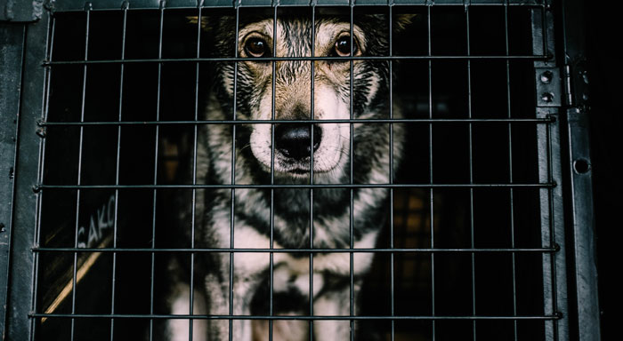 Dog crate tips and solutions