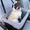 Pooch in Booster Car Seat