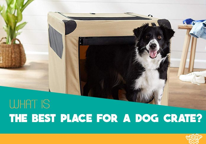 how to find perfect place for a dog crate