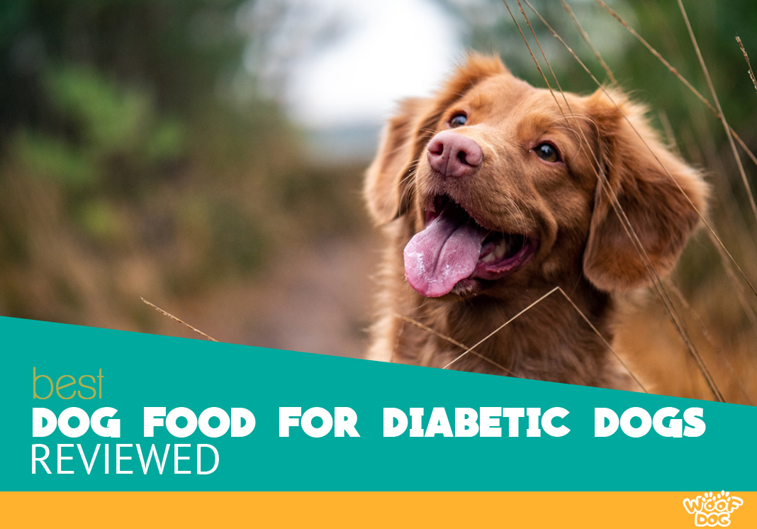 5 Best Dog Food For Diabetic Dogs Our Top Pick For 2019 Revealed