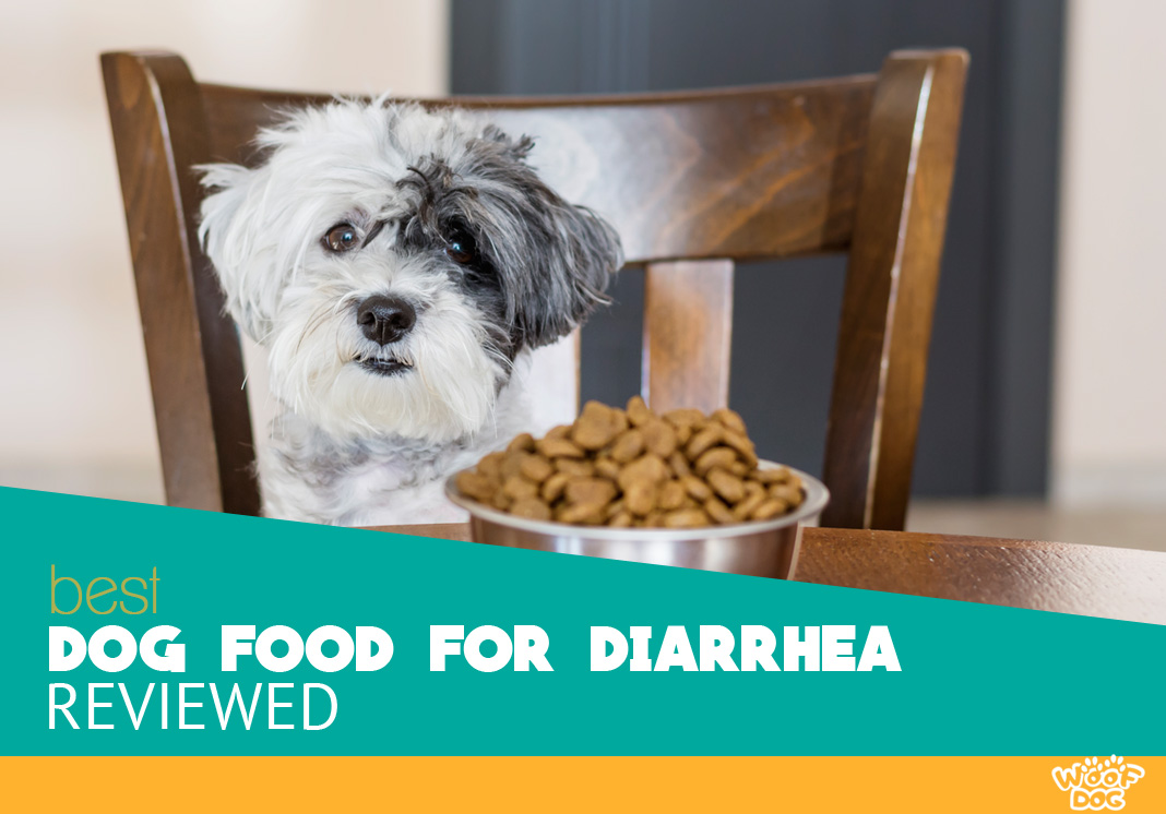 Best Rated Dog Food >> 8 Best Dog Food For Diarrhea 2019 Reviews Ratings