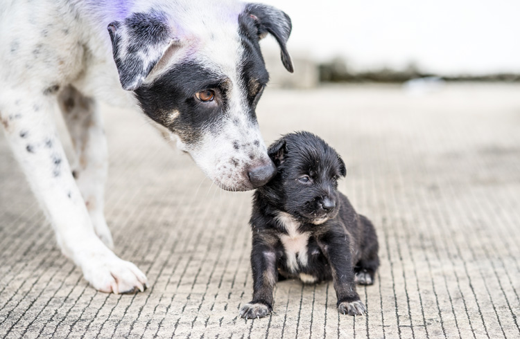 Image of puppy sitting on the road with mama