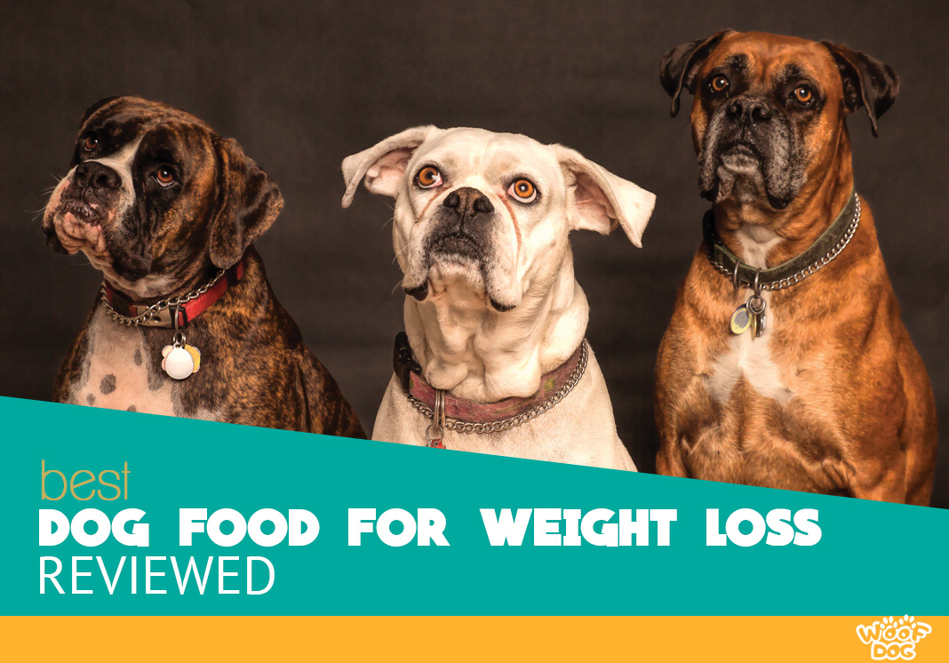 Top 5 Highest Rated Dog Foods for Weight Loss reviewed