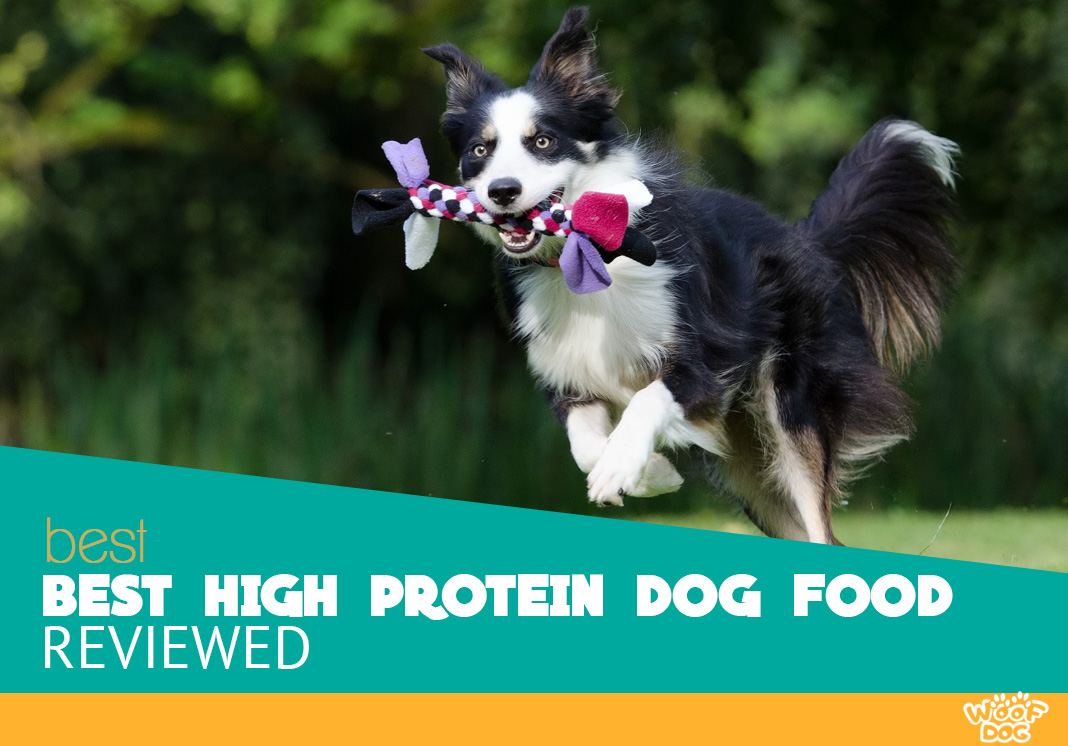 Top 8 high protein dog food reviewed
