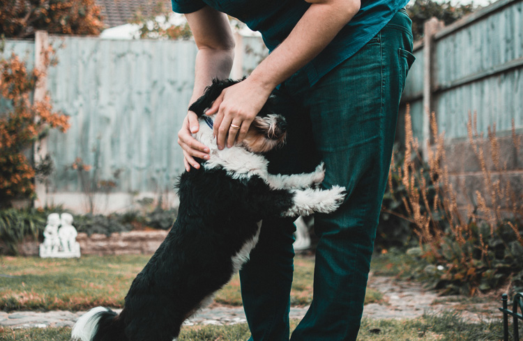 image of man playing with his dog